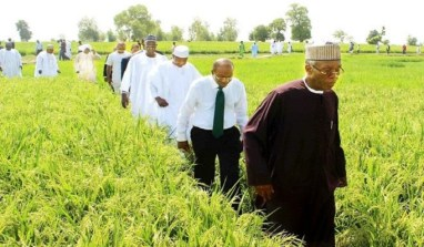 CBN Injects N4.9 Billion Loan To Rice Farmers