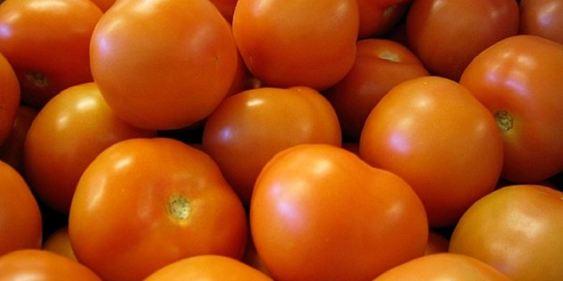 Tomato Ebola: Pesticide For Killing Moths Discovered