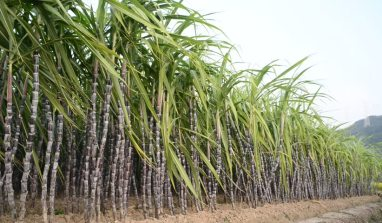 Quick updates on Nigeria's Sugar Master Plan