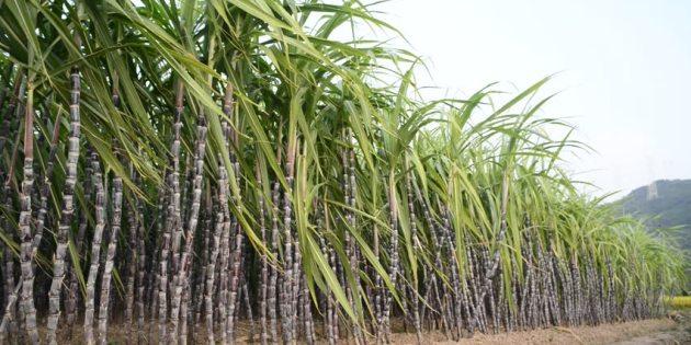 Quick updates on Nigeria's Sugar Master Plan