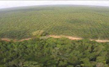 Okomu Oil Palm Plc