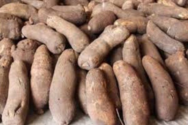 MSMEClinic gets 200,000 capacity yam storage facility in Benue