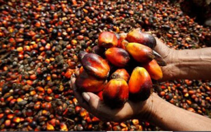 oil Palm, gainers and losers