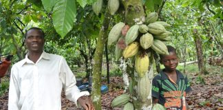 Nigerian Cocoa beats competitors, to earn N220.5 billion in 2019, Nigeria AFEX Cocoa, Nigerian cocoa beats competitors, set to record N220.5 billion in global market