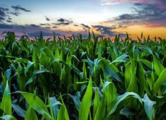 feeding Nigeria's current and future population