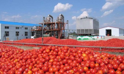 Dangote Tomato, tomato paste