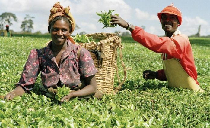 Nigeria's Agricultural sector records highest growth in Q1 2019