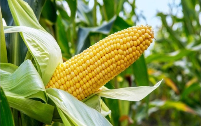 Stanbic, Union, and Sterling banks have disbursed N4.5 billion to farmers