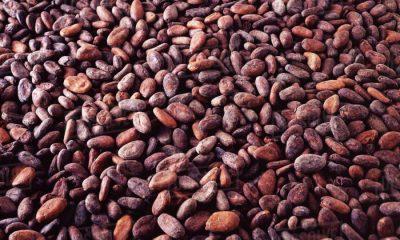 Top 10 Agricultural Products Export from Nigeria, Nigeria's cocoa exports to fall by $100m as prices rise in futures market., Africa May Lose $4.8 Billion in Crop Exports Due To Coronavirus
