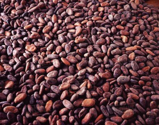 Top 10 Agricultural Products Export from Nigeria, Nigeria's cocoa exports to fall by $100m as prices rise in futures market., Africa May Lose $4.8 Billion in Crop Exports Due To Coronavirus, Ayade signs PPP agreement for $15m cocoa city project with Israeli Company