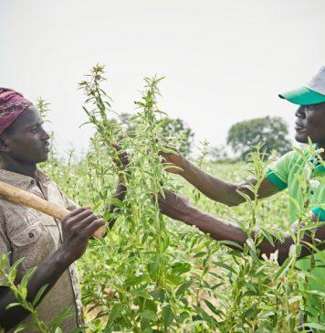 Nigeria's agricultural export