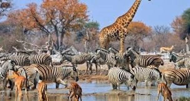 Wildlife at the Etosha National Park in Namibia