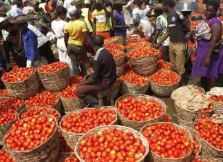 Tomato sellers in NIgeria, Nigeria's tomato shortfall: What's the way forward?