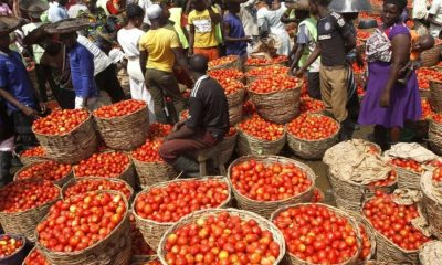 Tomato sellers in NIgeria, Nigeria's tomato shortfall: What's the way forward?