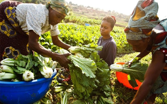 FG moves to reduce gender inequality in agriculture
