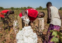 Cotton producers move to recover N4 billion CBN loan