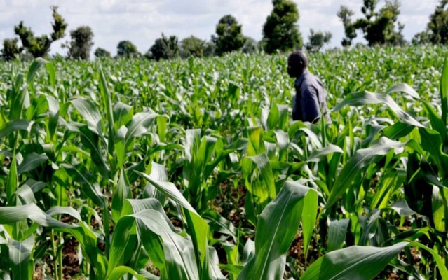 Agricultural financing