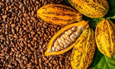 Nigeria's cocoa exports to fall by $100m as prices rise in futures market.