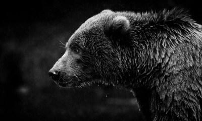 Nigerian Breweriesbringsthe Bears to party, Investors down N20.5 billion
