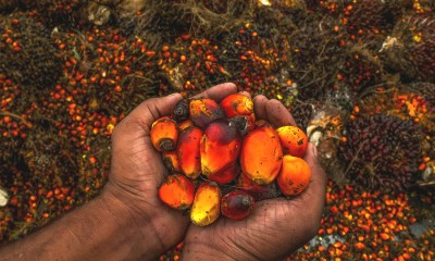 Okomu Oil Palm Company Plc. announces AGM and dividend payment of N2.00 per share , Presco reports N5 billion profits in 9M 2020, up by 56.4% from last year