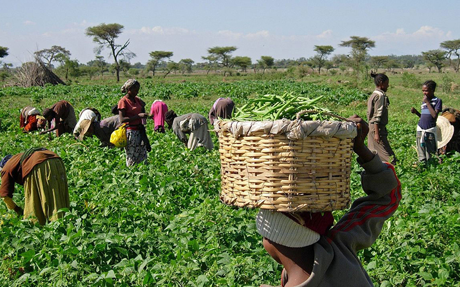 Nigerian farmers ask FG to extend repayment of CBN loan due to insecurity |  Nairametrics