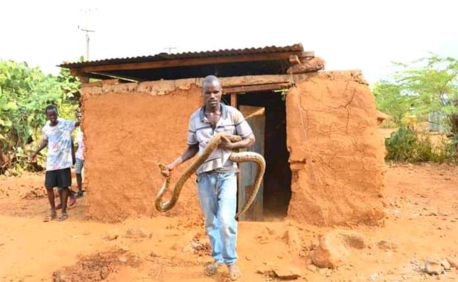 Baringo Village Stunned After Python Sleeps in Bed of Deceased Snake  Handler – Seal Digital Edition