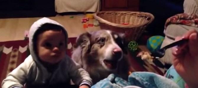赤ちゃんに「ママ」という言葉を教えていたら、なんと犬が先に覚えてしまった!