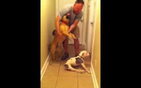 足の不自由な犬が、パパとの半年ぶりの再会に歓喜!一生懸命歩みよる姿に涙