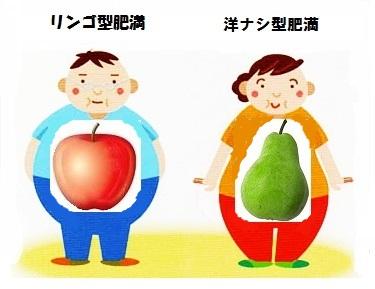 リンゴ型肥満と洋ナシ型肥満