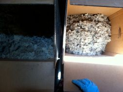 "It's hard to see, but about 5"" of compressed wool from the box on the left resulted in 15"" of fluffed wool on the right."