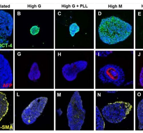 Alginate Composition Influences Expansion and Differentiation of Microencapsulated Embryonic Stem Cell Aggregates
