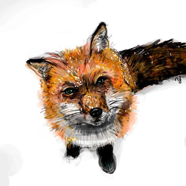 foxlyblog