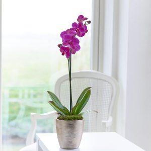 orhideja sarajevo