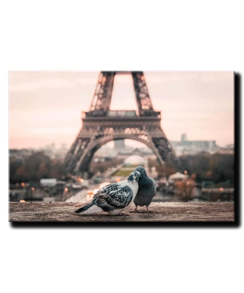 holubky v parizi pri eiffelovke 1d
