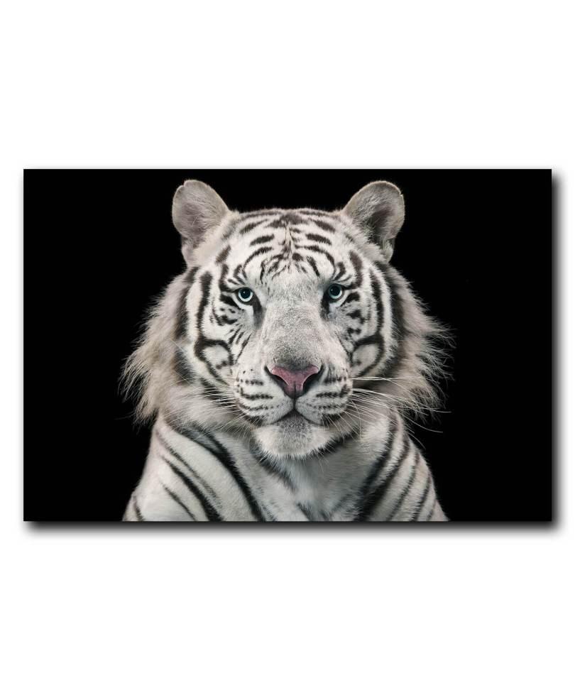 Obraz na stenu Biely tiger