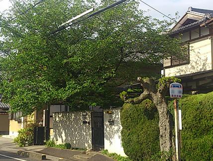 枝葉が電線や隣宅に広がった樹木に!