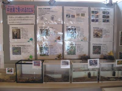 カエルの展示
