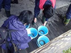 ユネスコスクール水生生物班