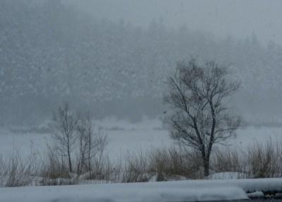 雪の中の小鳥たち