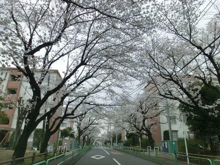 東高森団地の桜並木