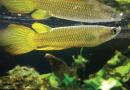 Penting!! 7 Tips Bagi Hobiis Ikan Dalam Mengantisipasi Listrik Mati Akibat PLN