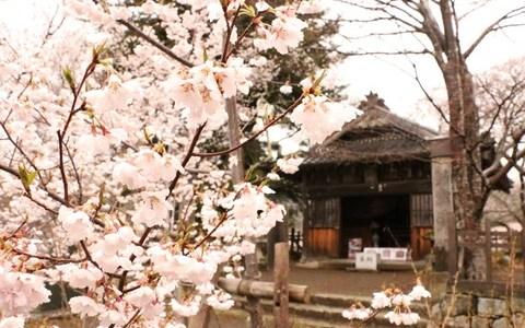 伊那の「高遠城址公園」に桜を観に行ってきた②