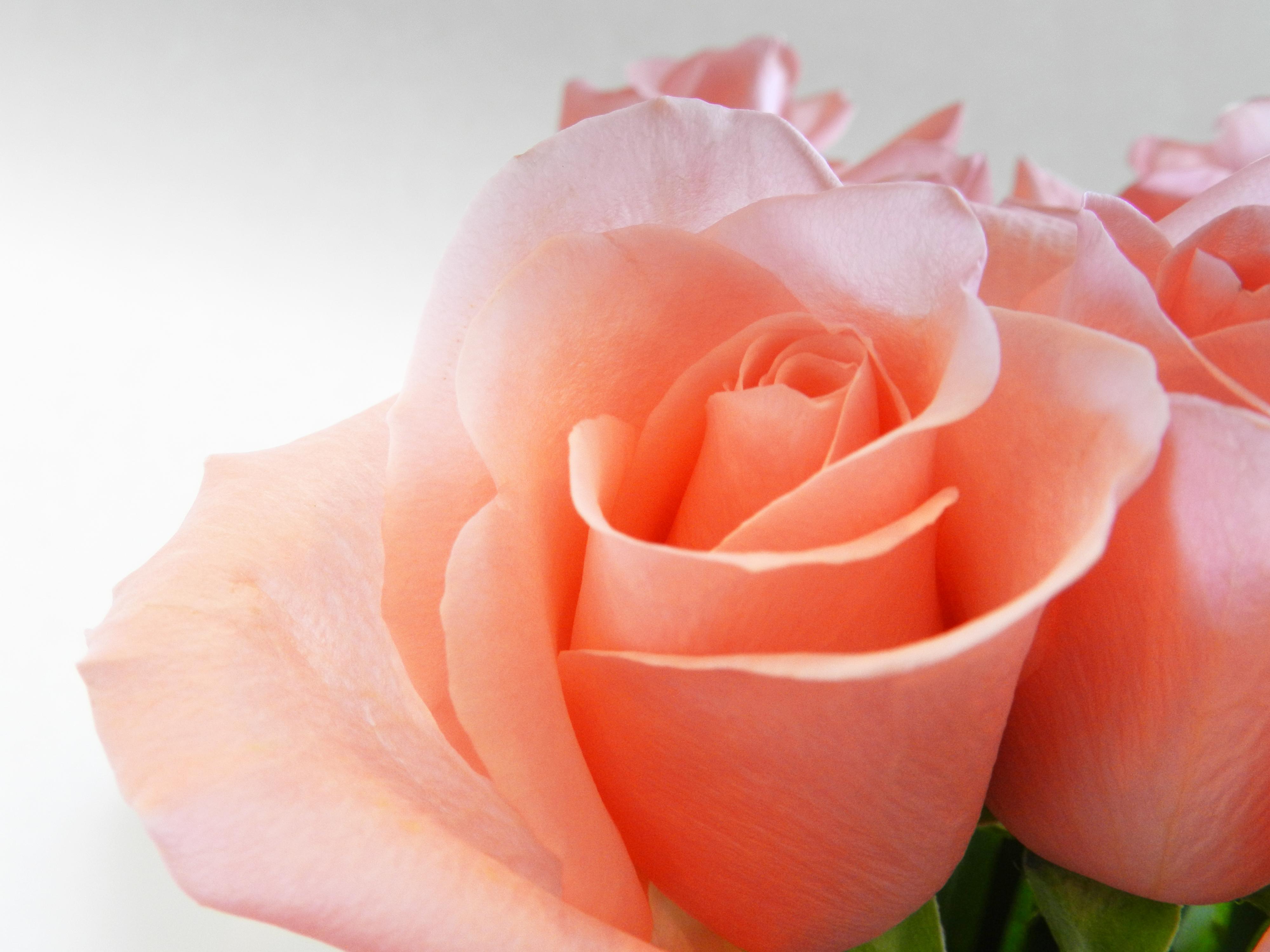 Добрый, розы для кати открытки