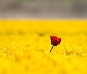 standing tallflower