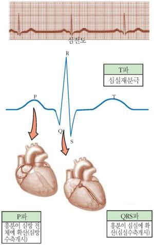 흉부유도전극 심전도 사진 및 각 파장의 의미 (출처: 생명과학대사전)