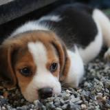 初めて犬を飼う時の心構え。一目惚れ、衝動買いは危険