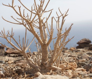 Plant from the mountain above Mogan