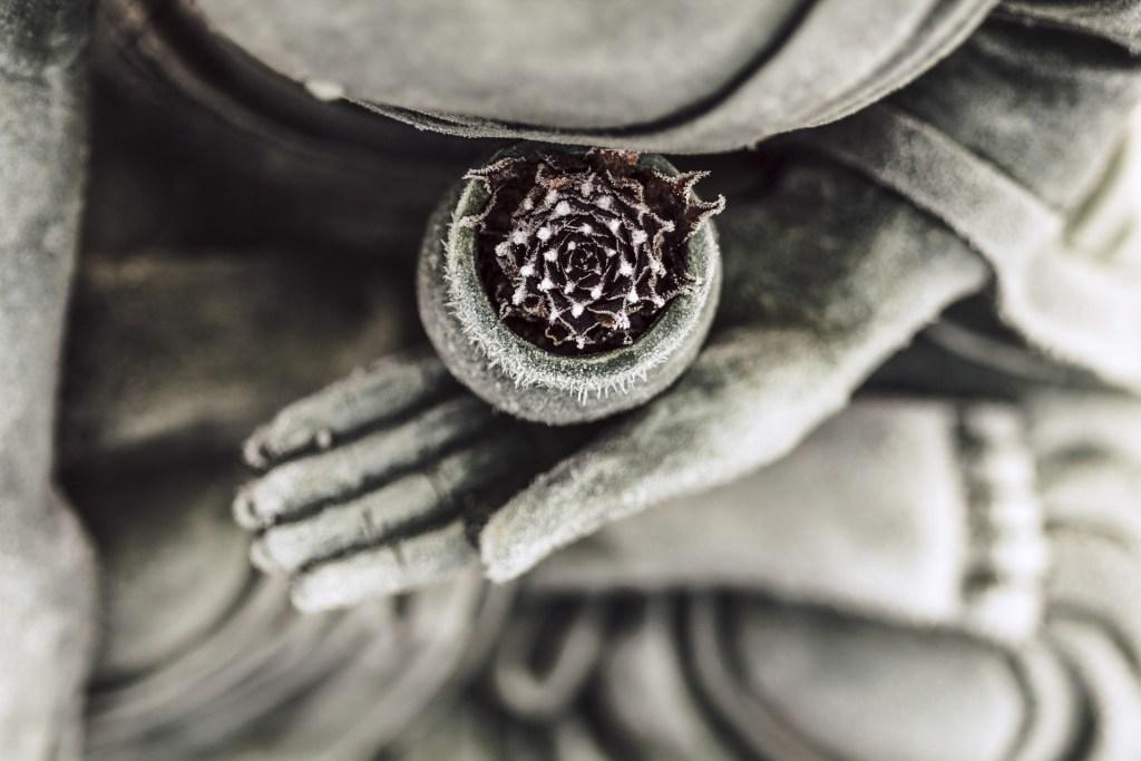 Immagine del Buddha