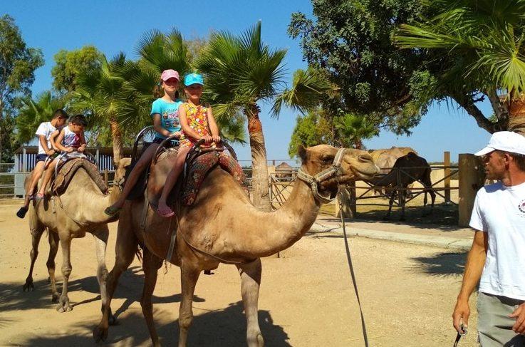Camel park, Kypr