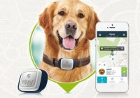 GPS chien chat kippy